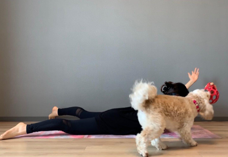 背中引き締めドッグフィット 肩甲骨周りをほぐして鍛える、飛行機エクササイズ 両肘を脇に寄せる 繰り返す