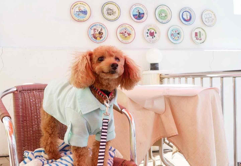 【稲村ヶ崎】愛犬とアマルフィ気分♪本場のイタリアン『タベルナ ロンディーノ』テラス席犬可能
