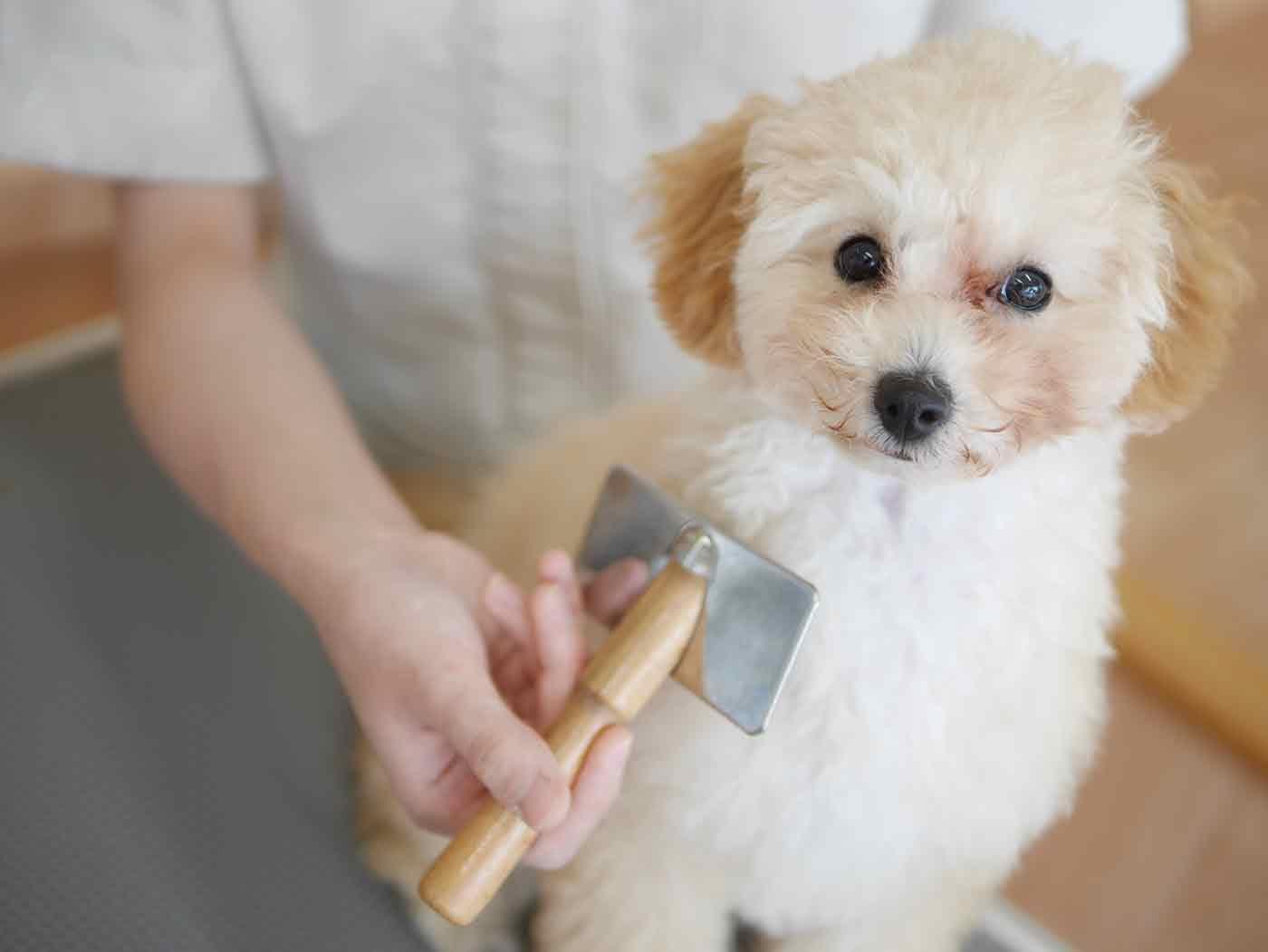 愛犬のトリミングシーン