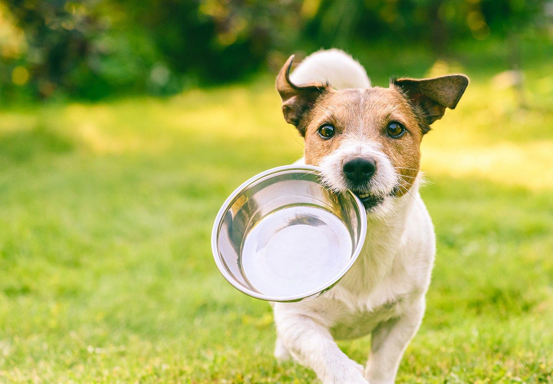 犬にささみを食べさせても大丈夫!おすすめの食べさせ方