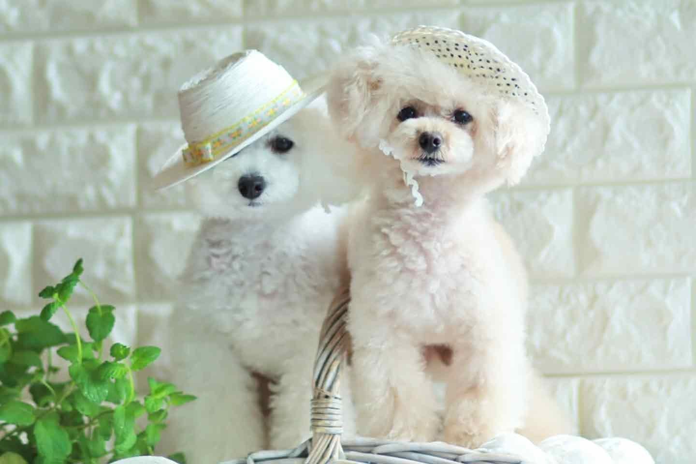 100均の紙紐で作れる 愛犬用麦わら帽子 日焼け対策