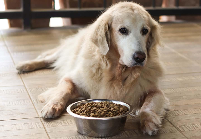 ゆっくり食べる犬