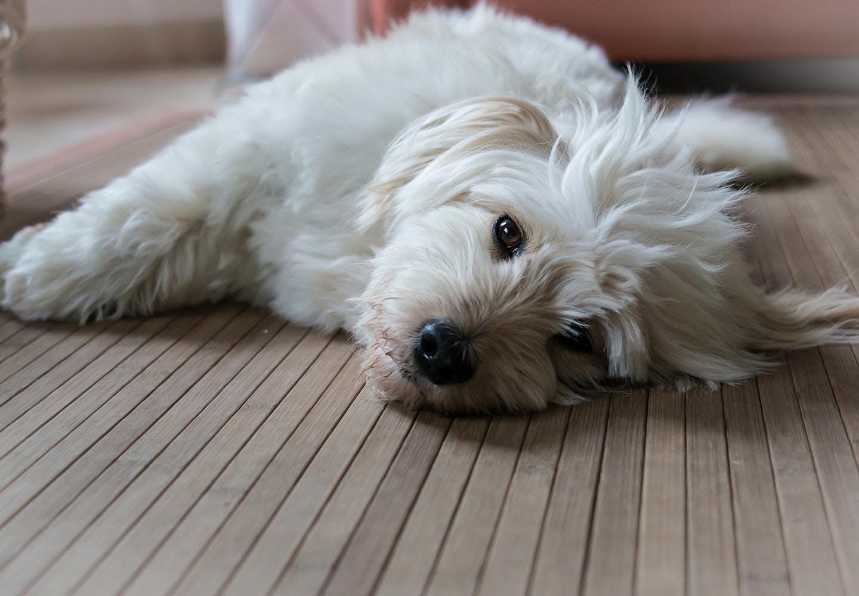 犬に好かれる人、嫌われる人の行動と特徴は?それぞれのポイントを解説【獣医師監修】