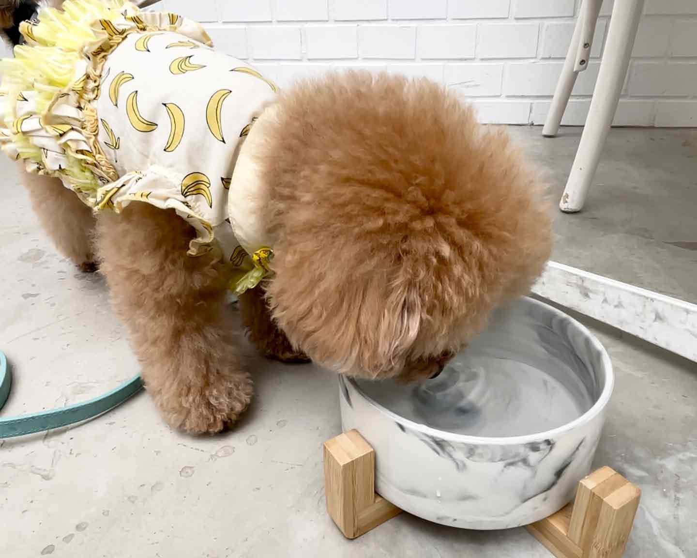 【代官山】『THE ROSE』 犬用水サービス