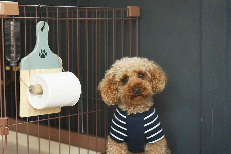 【100均のまな板】愛犬用トイレットペーパーホルダーを簡単に手作り!家中どこでも引っ掛けられて超便利♪