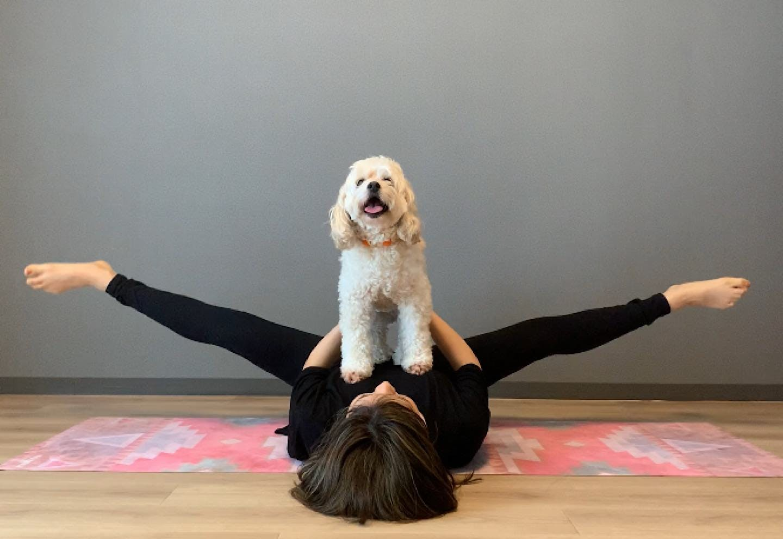 愛犬の体幹を鍛える、脚パカドッグフィット お腹に乗せて、足を開く