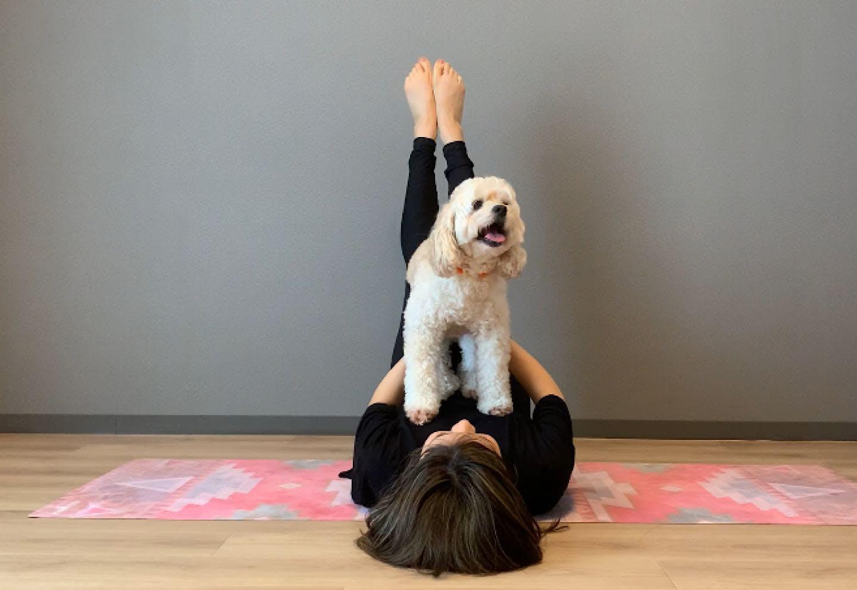 愛犬の体幹を鍛える、脚パカドッグフィット お腹に乗せて、足を上げる