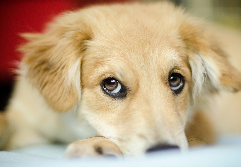 嫌がる犬に目薬を上手に差す方法は?正しい手順とやってはいけないNG行動を解説【獣医師監修】