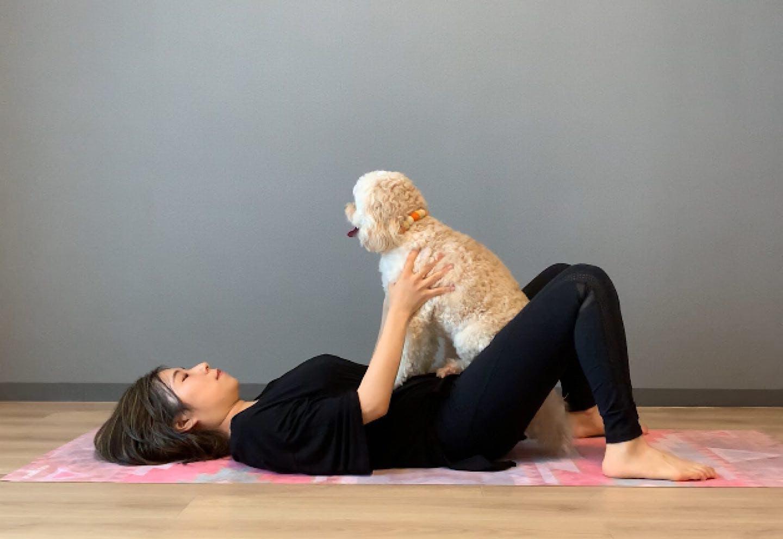 愛犬の体幹を鍛える、腰上げドッグフィット