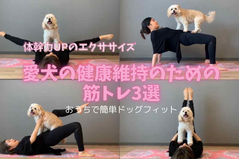 【体幹力UP】愛犬の健康維持のための筋トレ3選!四肢の強化は老後にも効く♪