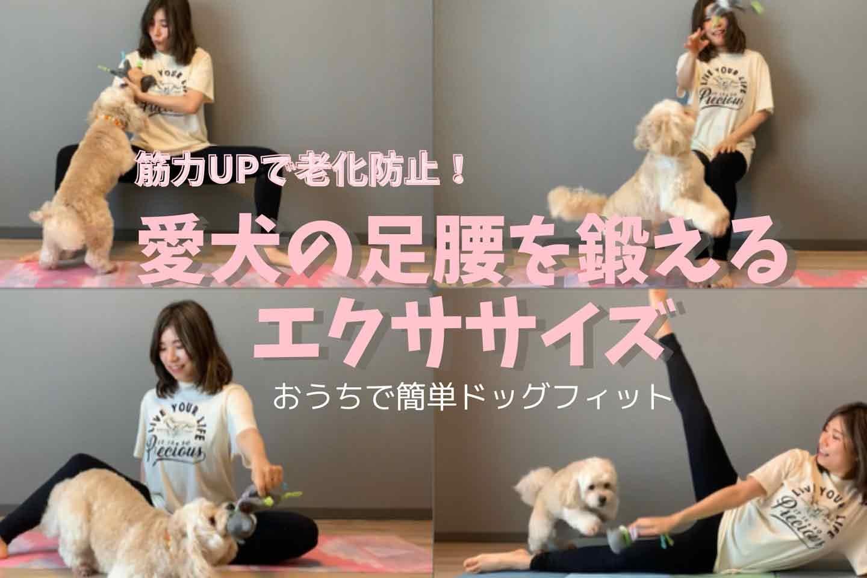 【筋力UP】愛犬の足腰の筋肉をほぐし&鍛えるエクササイズ3選♪丈夫な身体作りは老化防止にも効く!