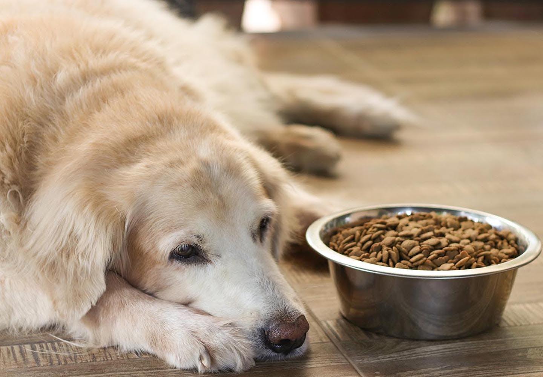 老犬の最期を看取る心構えとは?老衰の前兆と、お別れの際に飼い主ができること・準備するものを解説【獣医師監修】