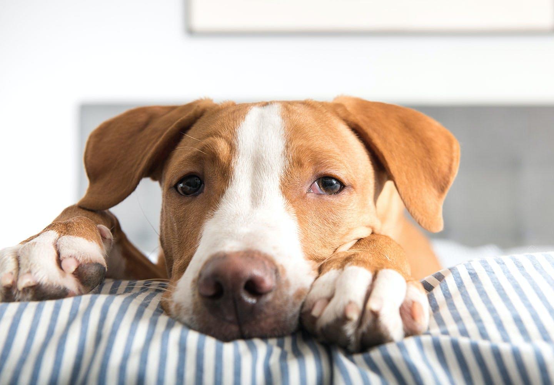 犬にささみを食べさせても大丈夫!持病のある犬