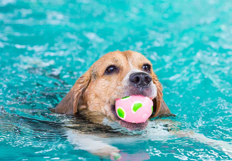 水遊び中の犬