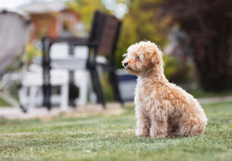 他の犬が苦手な犬への対処法は?怖がる理由や克服するコツを解説【獣医師監修】