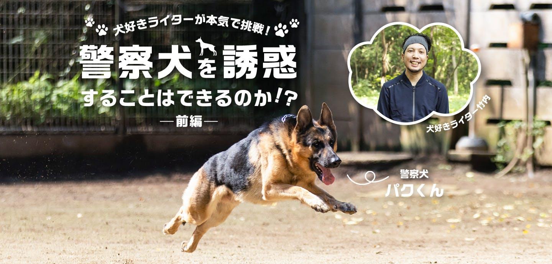 【検証企画】犬好きライターが本気で挑戦! 警察犬をエサやおもちゃで誘惑することはできるのか?ー前編ー