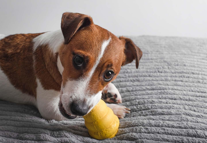 コングで犬の早食い防止