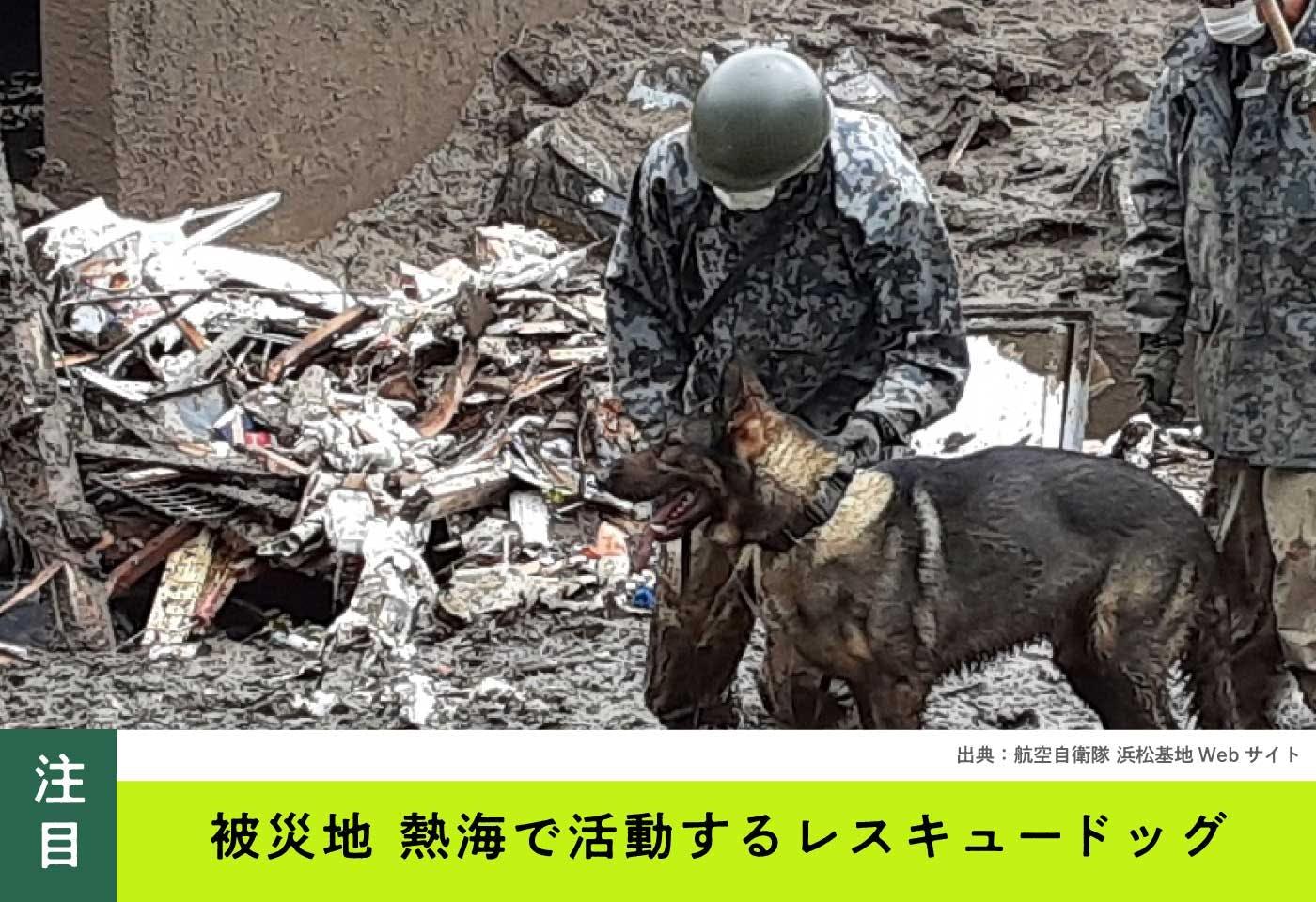 【災害救助犬】被災地・熱海の最前線で活動するレスキュードッグの姿