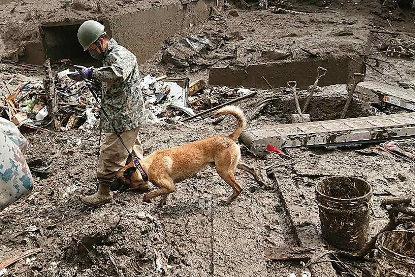 捜索に集中する災害救助犬