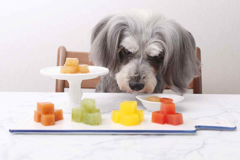 【水分補給おやつ】超簡単★愛犬用カラフルゼリー★ほぼゼロカロリーの寒天使用!お散歩に持っていける♪