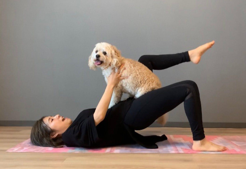 愛犬の体幹を鍛える、腰上げドッグフィット 左右の足を上げる