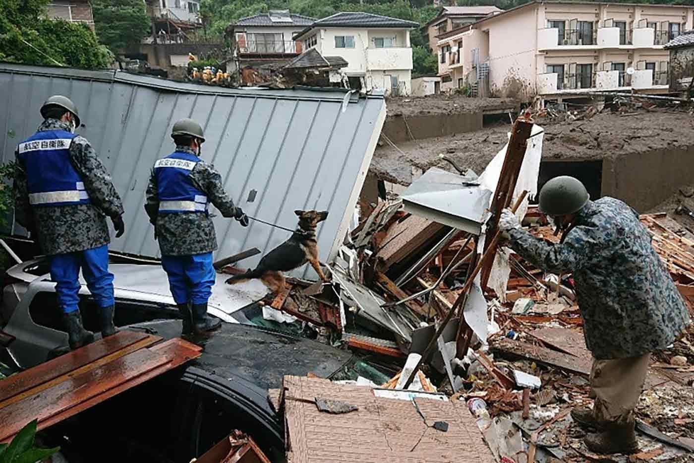 瓦礫の中で行方不明者を捜索する災害救助犬(レスキュードッグ)