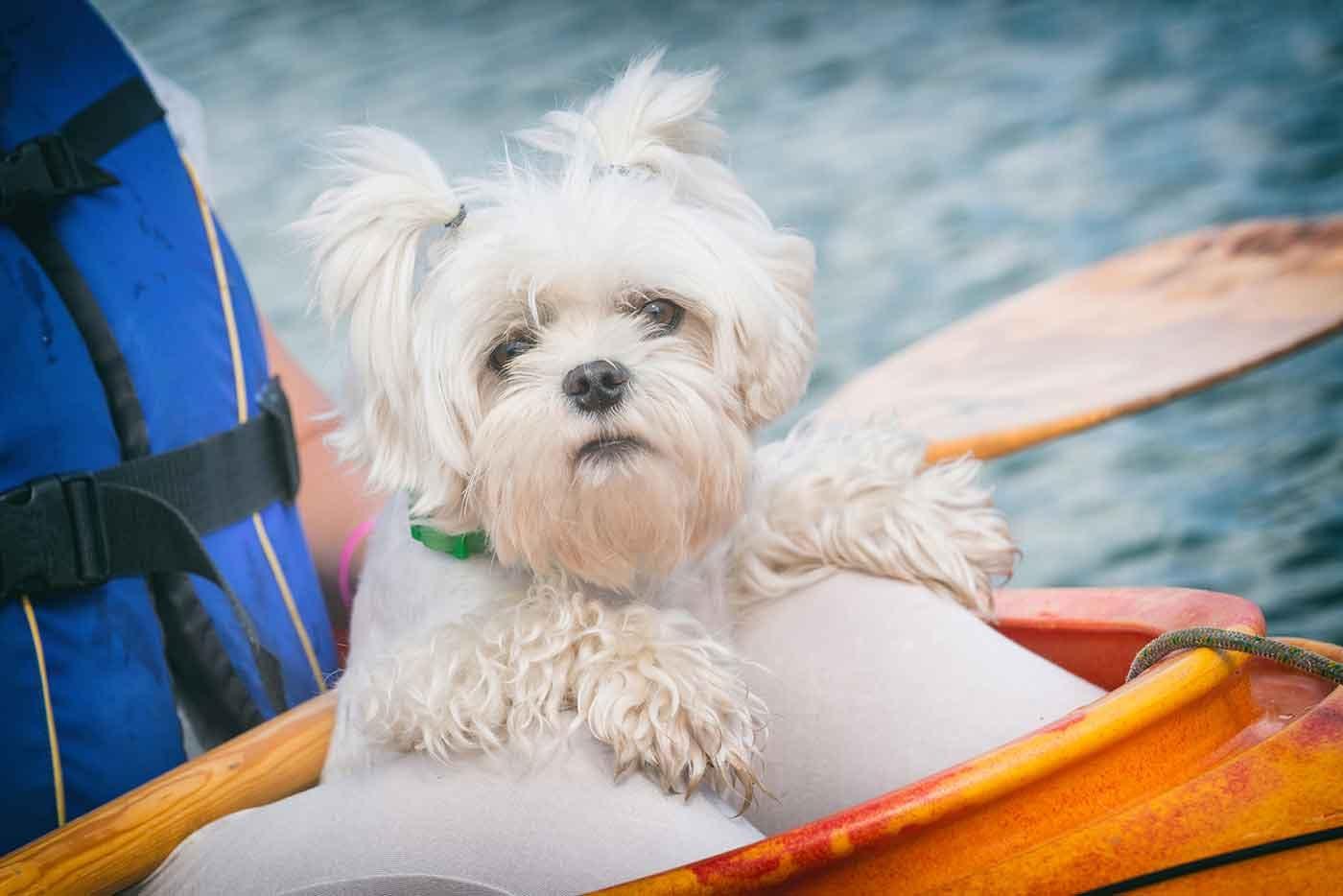琵琶湖マリオットホテルのアクティビティに参加する犬