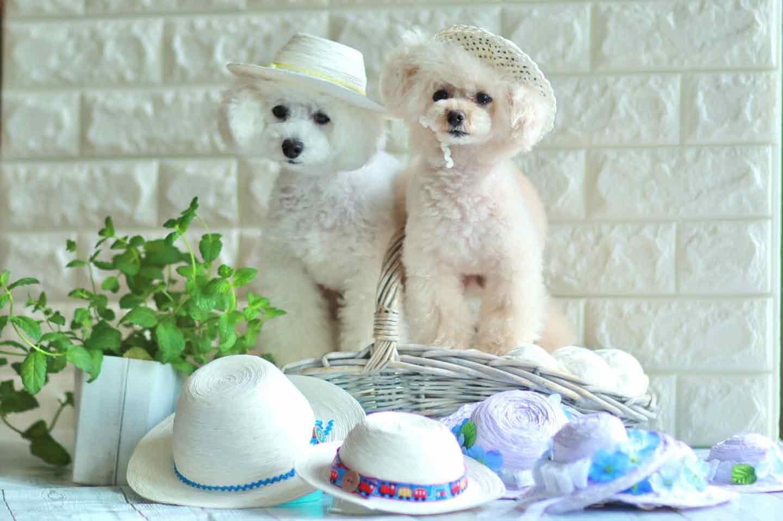【編まずに作れる】超簡単な愛犬用麦わら帽子!100均の紙紐を巻くだけ♪紫外線・熱中症対策もバッチリ◎