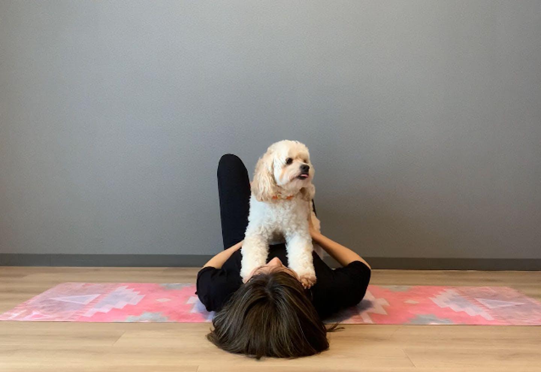 愛犬の体幹を鍛える、脚パカドッグフィット