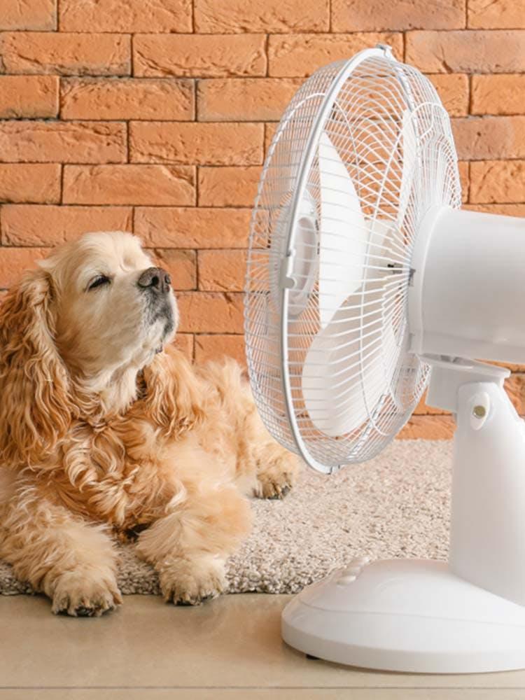 犬は扇風機の風を涼しく感じるの?暑さ対策になる効果的な使い方や注意点を解説【獣医師監修】