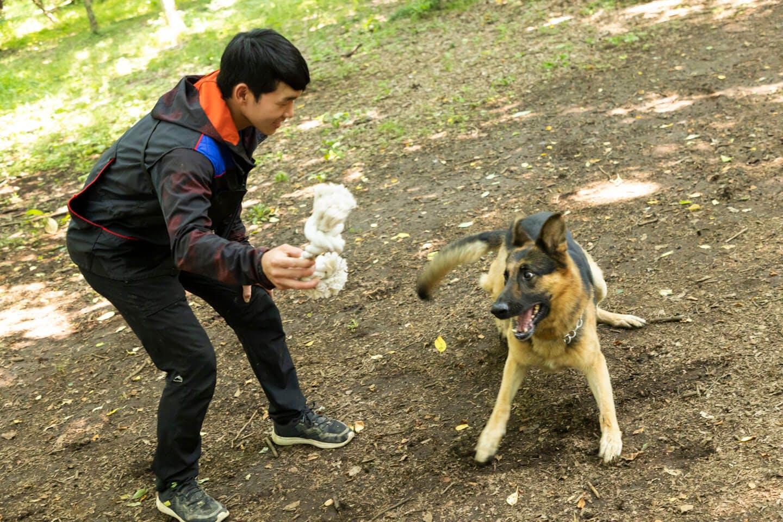 かじりんボーンで遊ぶ訓練士の稲留さんとジャーマン・シェパードの警察犬パクくん