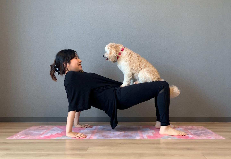 愛犬の体幹を鍛える、逆プランクドッグフィット 犬を膝に乗せて上下に腰をさせる