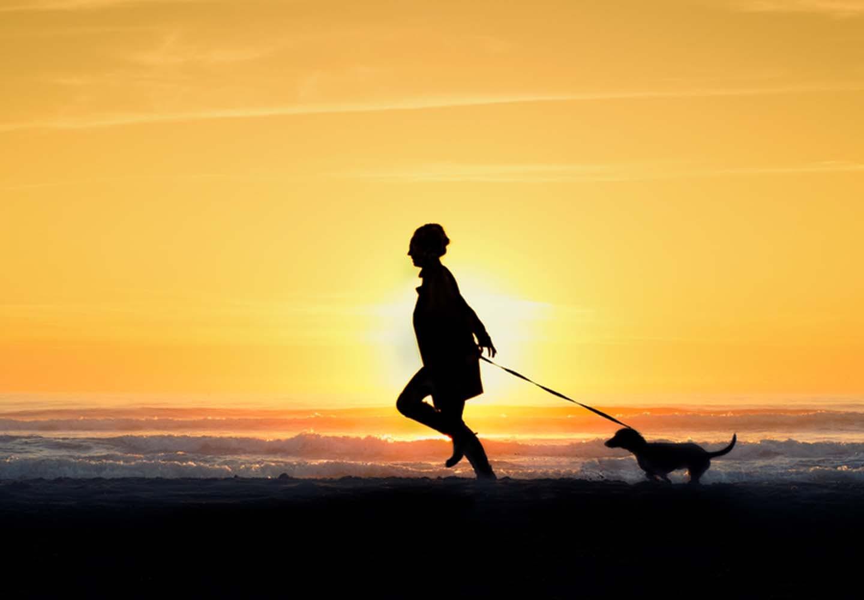 夕方に犬の散歩をする