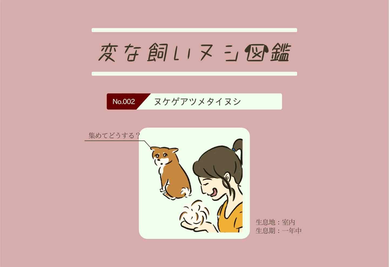 愛犬の換毛期に大興奮…⁈『ヌケゲアツメタイヌシ』変な飼いヌシ図鑑【No.002】