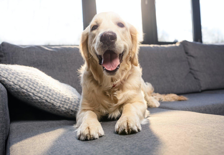 indoor_dog_p02