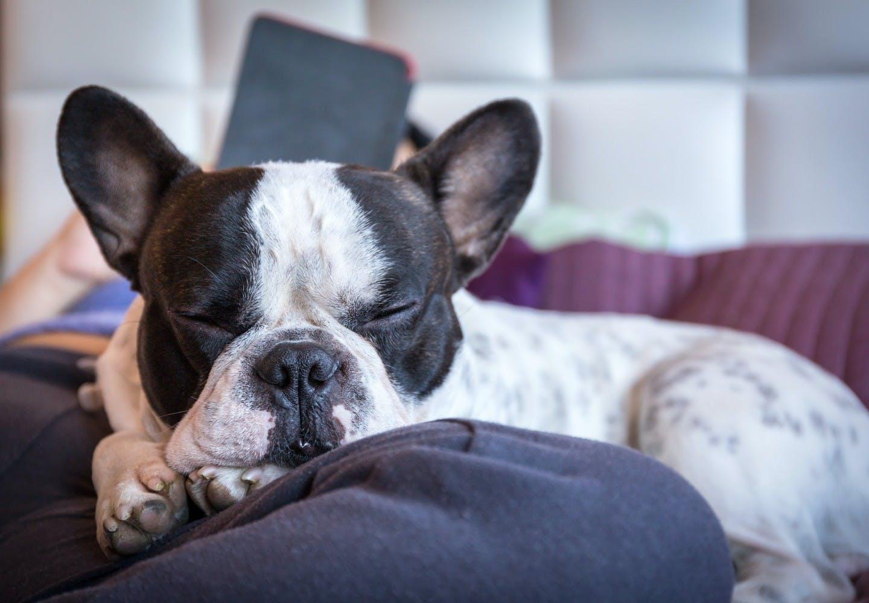 犬が足元で寝る理由とは?飼い主との関係性や寝方から考えられる信頼度について解説【獣医師監修】