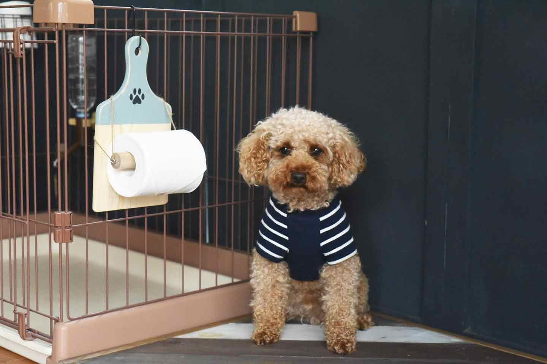 愛犬用トイレットペーパーホルダーの作り方  100円ショップの材料で簡単
