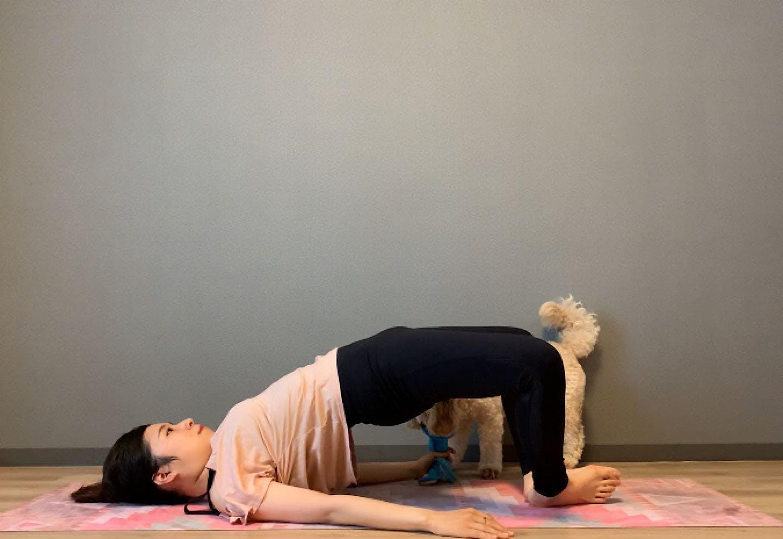 上向きヒップのための美尻ドッグフィット 愛犬と腰上げエクササイズ