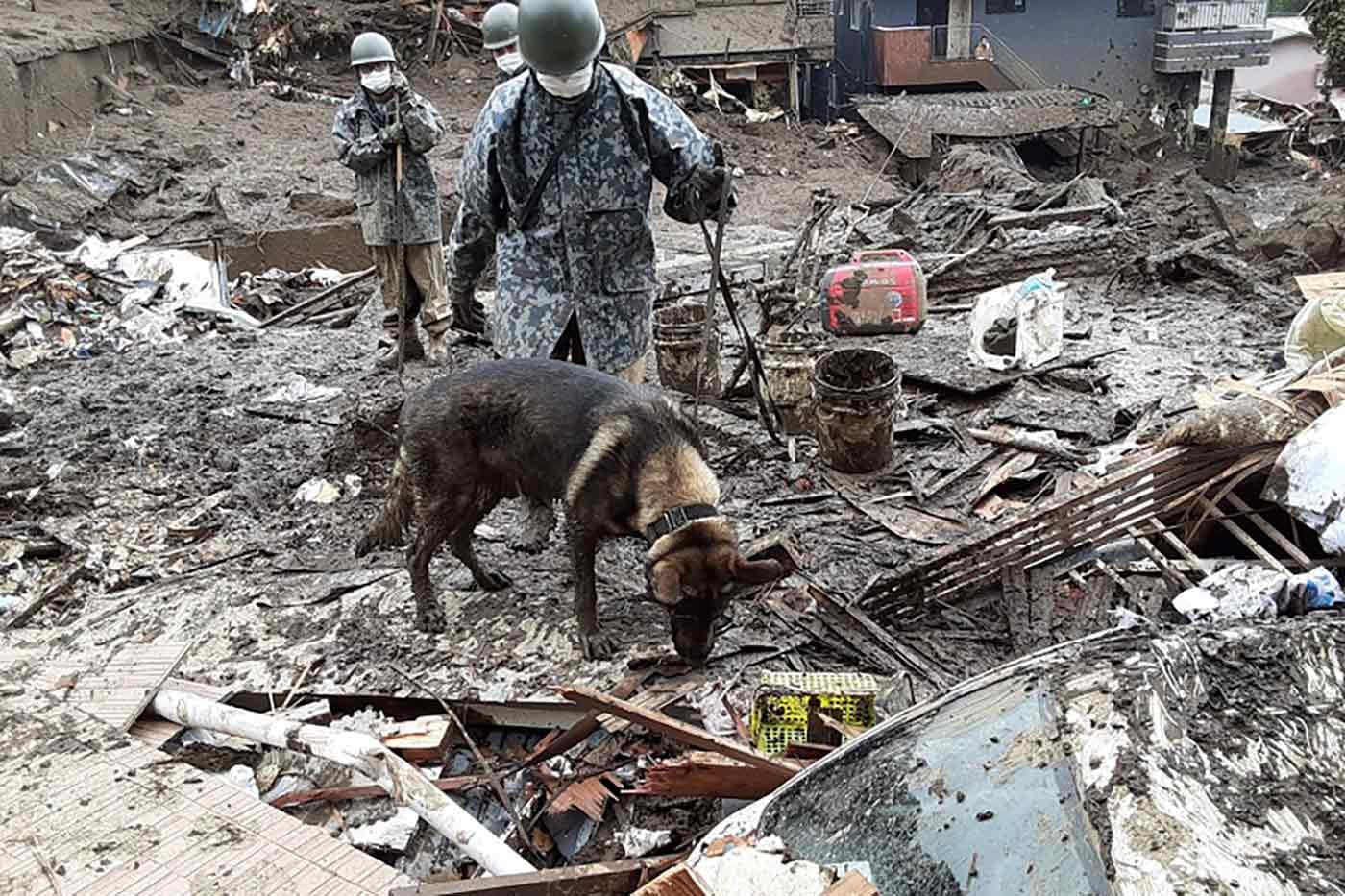 捜索中の災害救助犬