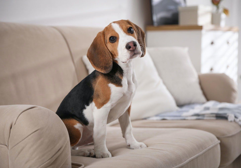 犬にささみを食べさせても大丈夫!食べさせるメリット