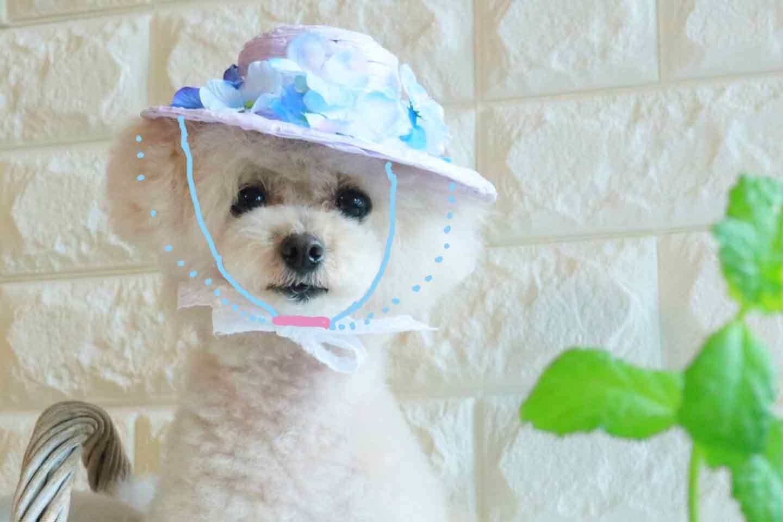 100均の紙紐で作れる 愛犬用麦わら帽子 あご紐を蝶結び