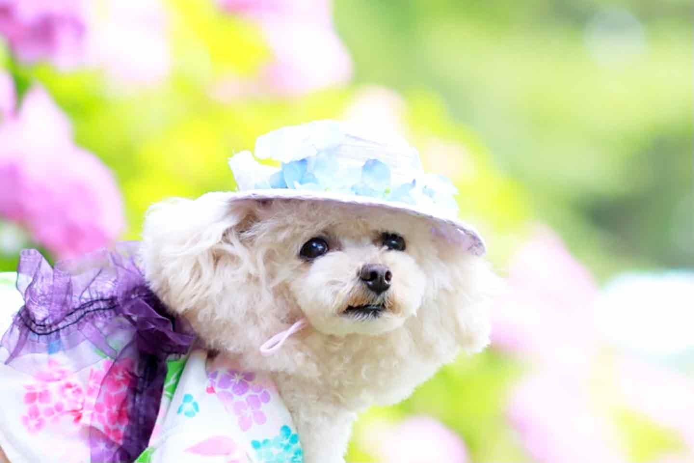 100均の紙紐で作れる 愛犬用麦わら帽子 リボンとお花を飾る