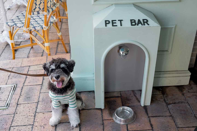 『クレープス ノカオイ 』 テラス犬OK  ペットバーあり