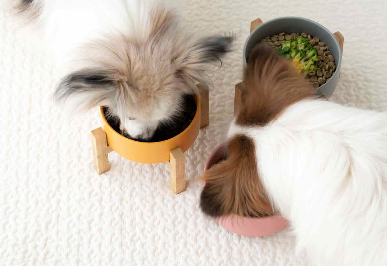 食材1種類をトッピングするのもOK!まずは愛犬が好みそうな食材で♪