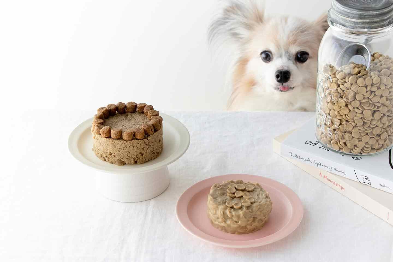 【ふやかすだけ】超簡単な愛犬用ケーキの作り方!いつものフードをアレンジして特別なイベントごはんに変身♪