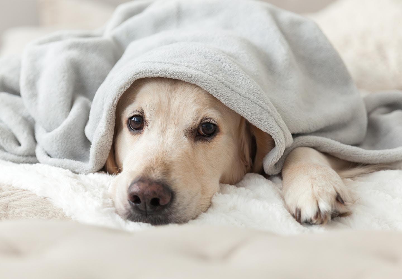 具合が悪い犬