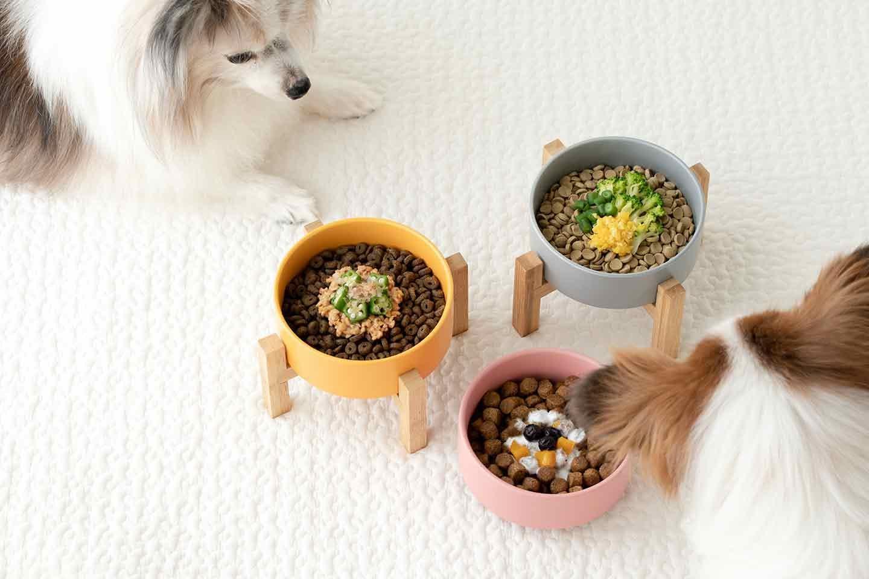 【冷凍野菜・フルーツを使用】愛犬用簡単作り置きレシピ3選!加熱不要で盛るだけのドッグフードトッピング