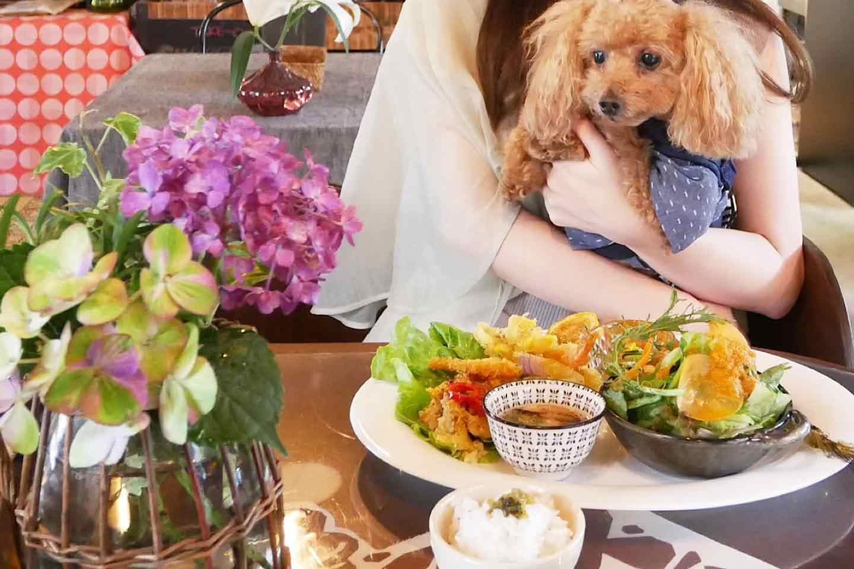 【名古屋周辺】店内・屋根ありの愛犬同伴可能な人気カフェ3選!暑い夏や急な天候の崩れでも大丈夫♪