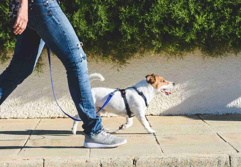 犬の寿命を縮めるNG習慣