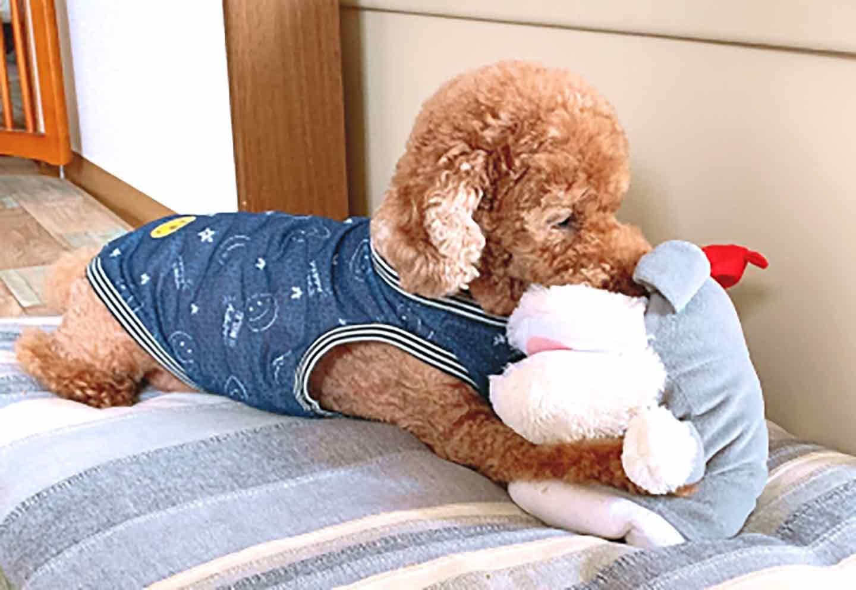愛犬に頭を使った遊びが必要な理由 自制心のトレーニング